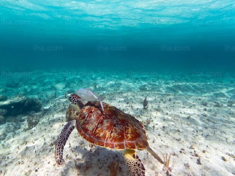 Playa-del-carmen-Tortuga