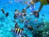 cozumel-snorkel-3